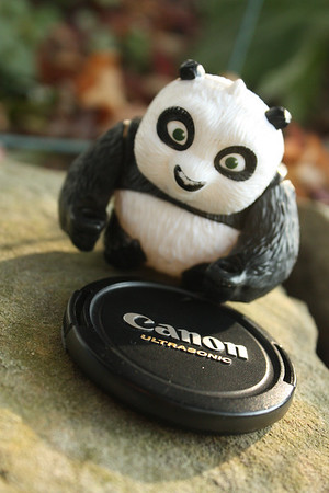 the daily panda